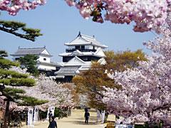 松山城sakura